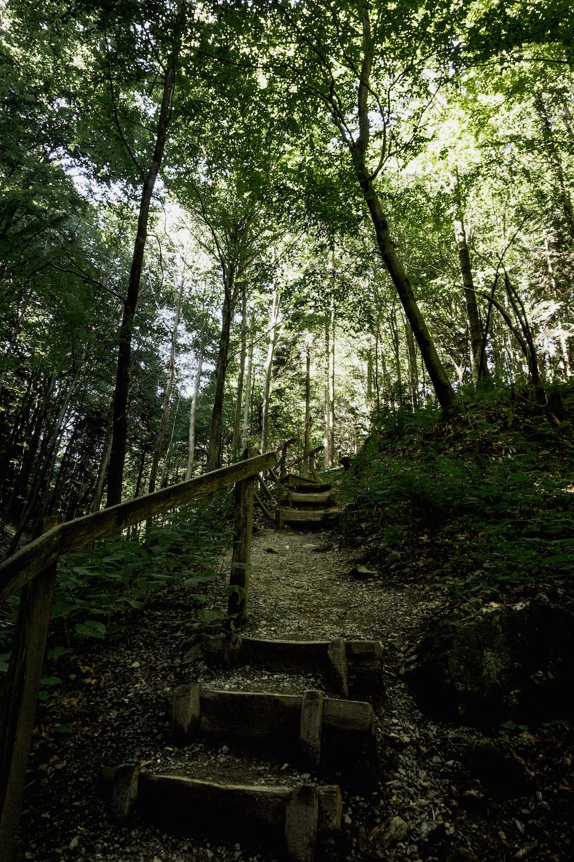 Altenbachklamm - Wandern in Oberhaag