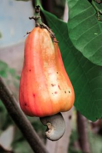 10 Gründe warum man öfters Cashews naschen sollte