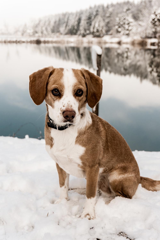 Einem Hund aus dem Tierheim ein Zuhause geben