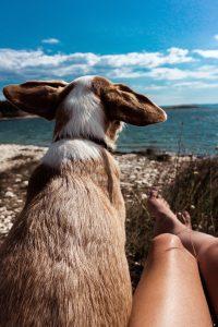 Alleine verreisen mit Hund
