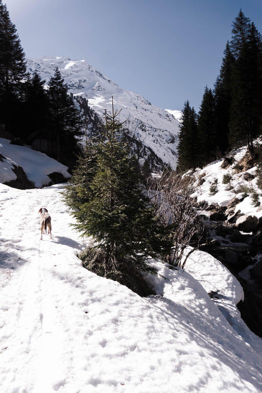 Wandern im Stubaital zur Bsuchalm