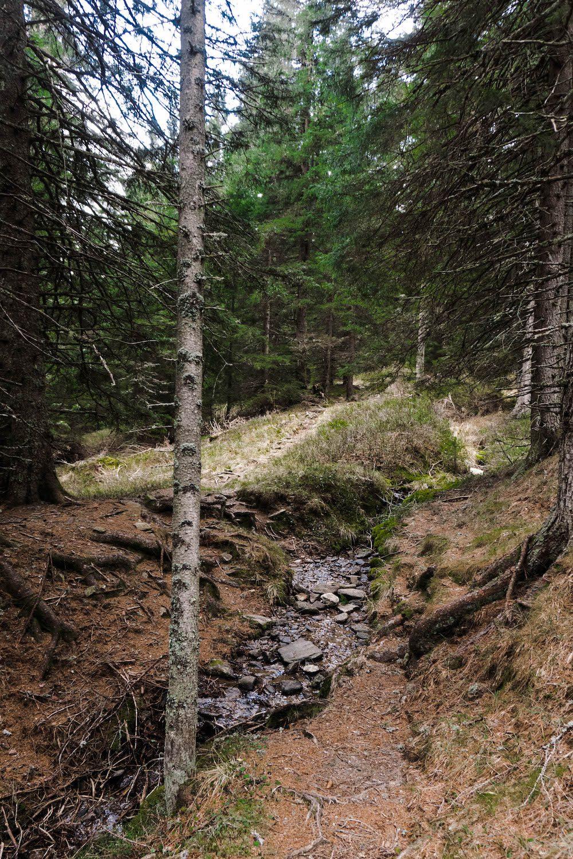 Waldweg Weinebene