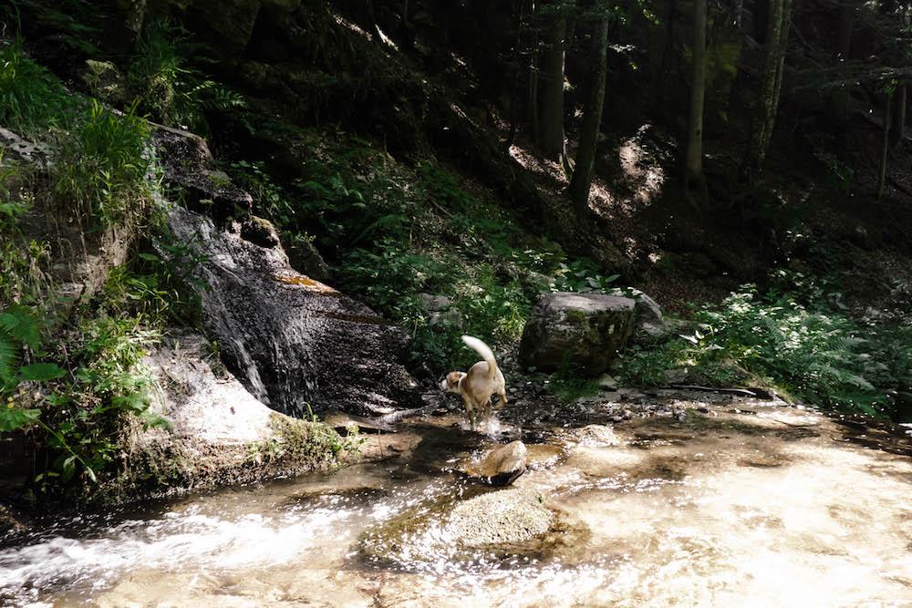 Der zweite Teil der Soboth Wildwanderung - Wandern mit Hund