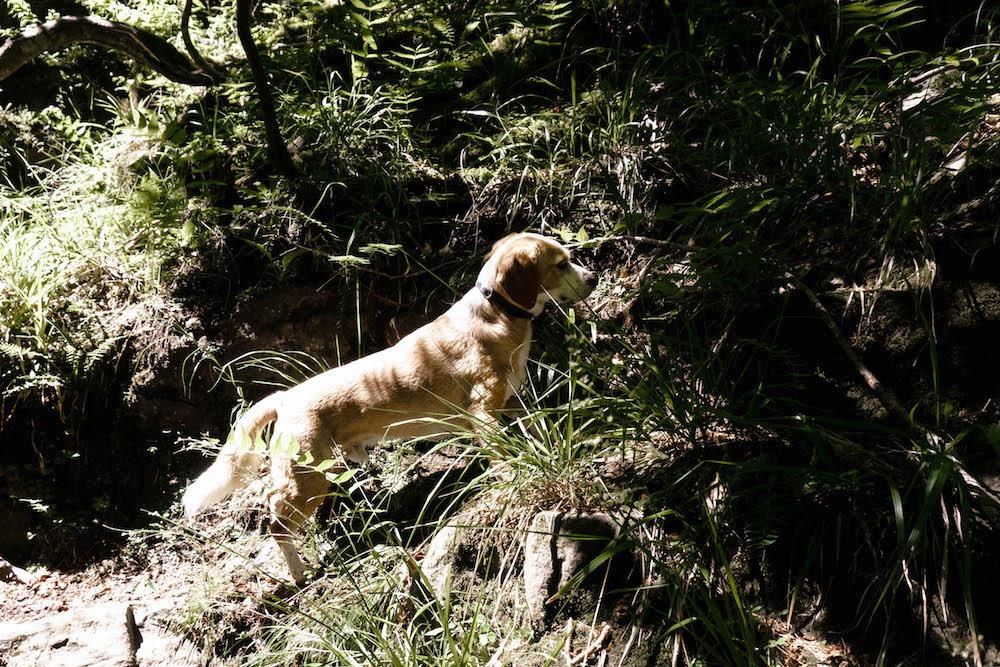 Der zweite Teil der Soboth Wildwanderung mit Hund