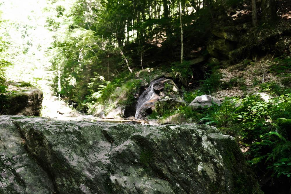 Der zweite Teil der Soboth Wildwanderung - Into the wild
