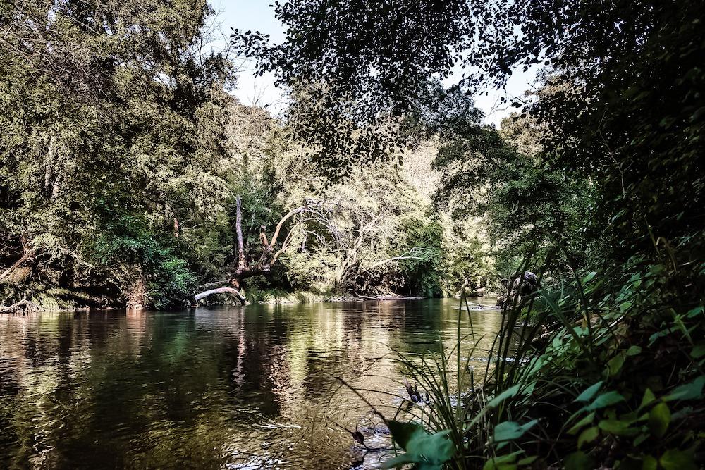 Ein Krieg gegen die Natur - Hilfe für den Regenwald