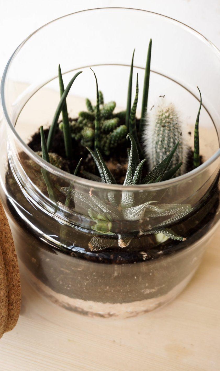 Geschlossene Glasgärten - Ewiges Leben ohne Gießen