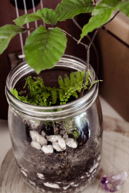 Ein Garten im Glas