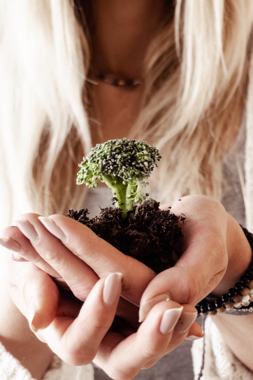 Nachhaltige Ernährung – Wie Essverhalten und Umwelt zusammenhängen