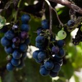 Saisonales Gemüse und Obst im Oktober
