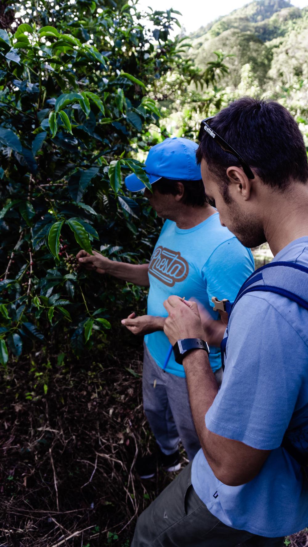 Eine Woche in Costa Rica - Don Eli Coffee