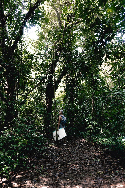 Eine Woche in Costa Rica - Wanderung Urwald Dominical