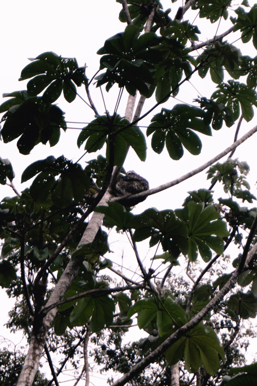 Eine Woche in Costa Rica - Faultiere in Dominical