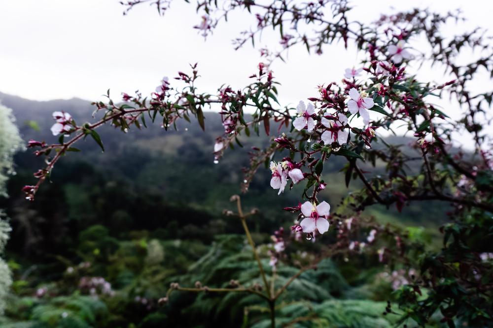 Eine Woche in Costa Rica - Hochland