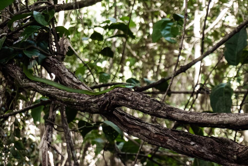 Die Pazifikküste Costa Rica's rauf und runter - Schlange