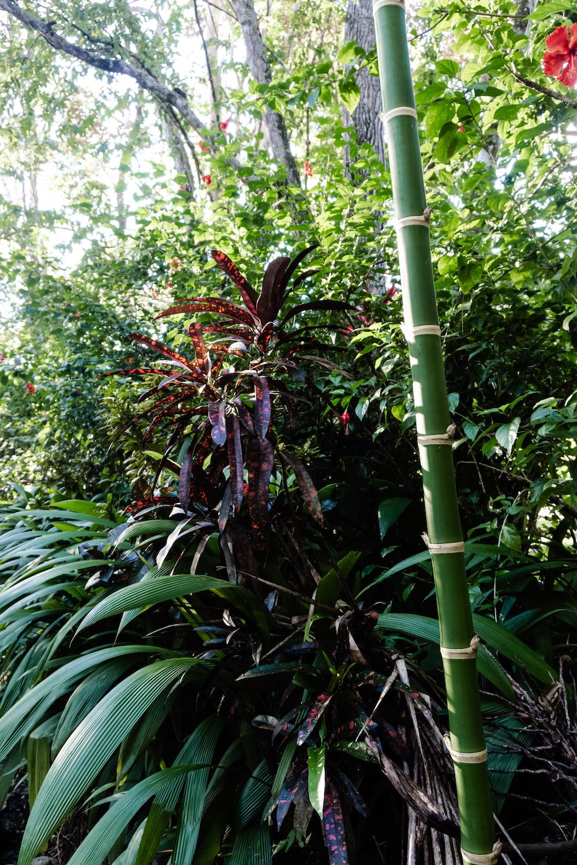 Die Pazifikküste Costa Rica's rauf und runter - Puerto Jimenez Pflanzen