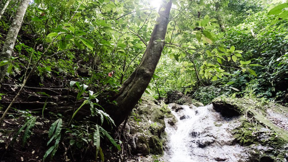Die Pazifikküste Costa Rica's rauf und runter - Matapalo Wandern
