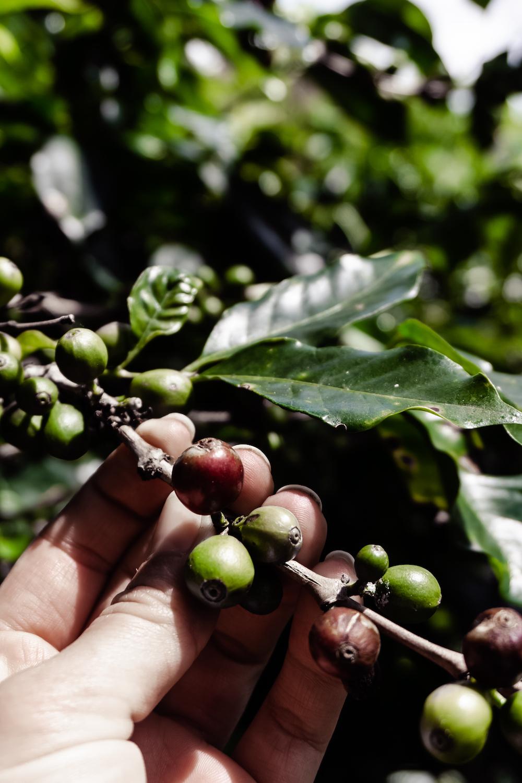 Zu Gast auf der Kaffeefarm von J Hornig Kaffee - Coffeelove
