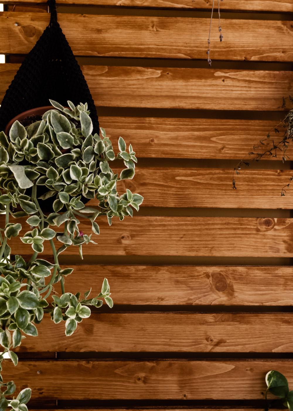 BOHO BALKON GESTALTEN - Hängepflanzen