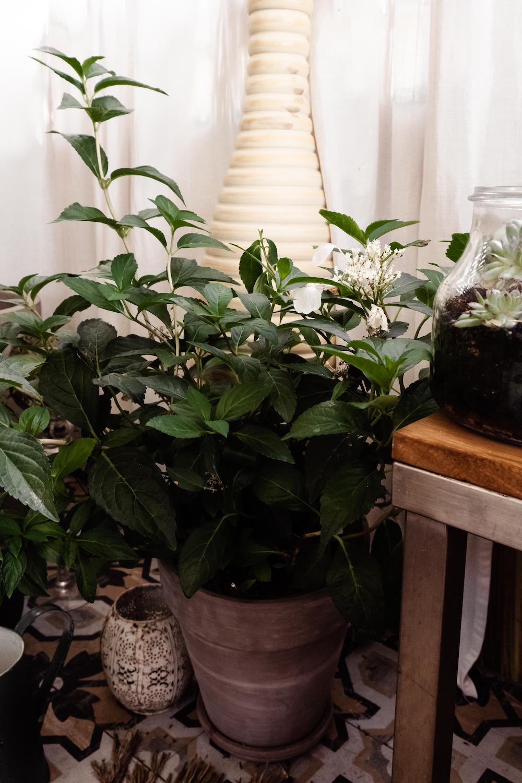 BOHO BALKON GESTALTEN - Pflanzen