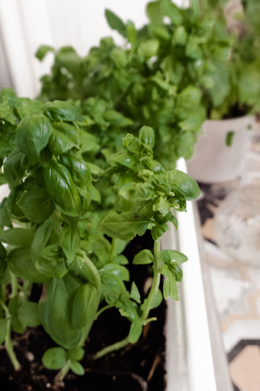 BOHO BALKON GESTALTEN -  Kräuter pflanzen