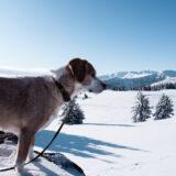 Wandern von der Göslerhütte zur Grünangerhütte