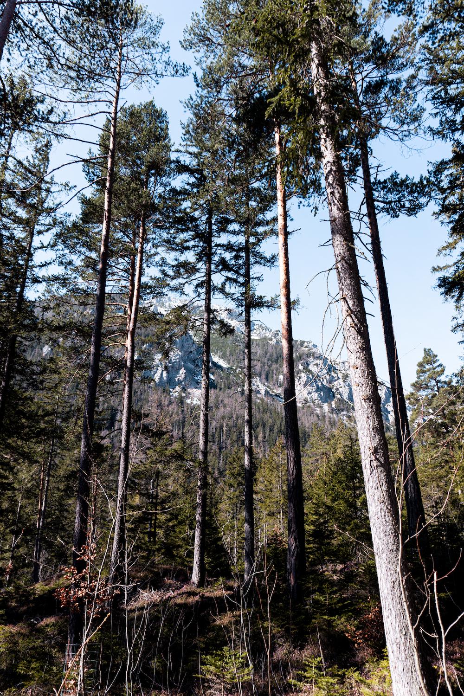 Wanderung zum Grünen See / Berge und Bäume